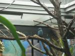 Fairy Bluebird Stands On Branch And Looks To Side animaux de                   Caralyn50 provenant de Oiseau bleu 2