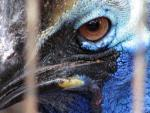 Extreme Close-Up Of Cassowary Eye Through Thin Cage Bars animaux provenant de Cacasoars
