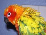 Close-Up View Of Wet Parrot With Feathers Split Apart animaux provenant de Conure