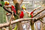 Janday Conure And Other Intensely Colorful Birds animaux provenant de Conure