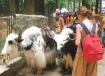 Western Tourist With Red Backpack Encounters Two Tacked-Up Yaks animaux provenant de Yak