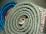 Hamster Pokes Nose And Face Out Of Center Of Rolled Up Carpet animaux provenant de Hamster