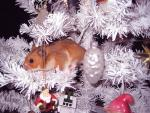 Light Brown hamster Crawls In Snow White Artificial Christmas Tree With Decorations animaux provenant de Hamster