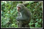 Nicely Composed Light-Colored Macaque Seen From Side animaux provenant de Macaque