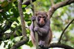 Worried Looking Macaque Holds Vertical Branch Tightly With Hands animaux provenant de Macaque