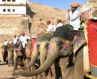 (Asian) Indians Riding Painted Elephants animaux provenant de Elephant