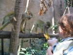 Two Inquisitive Squirrel Monkeys Take Food From Plastic Cup animaux provenant de Singe Squirrel