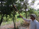 Spider Monkey Reaches From Bolivian Tree To Take Something From Person's Hand animaux provenant de Singe Spider