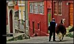 Man Leads Llama Down Steep City Street With Brightly Colored Buildings animaux de                   Adeline6 provenant de Lama