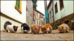 Five cats eating kibble on a South American street animaux provenant de Chat